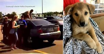 Puppy on the Brink of Death Heroically Saved from a 130-Degree Car