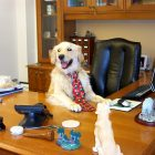 "Today Is ""National Take Your Dog to Work Day"""