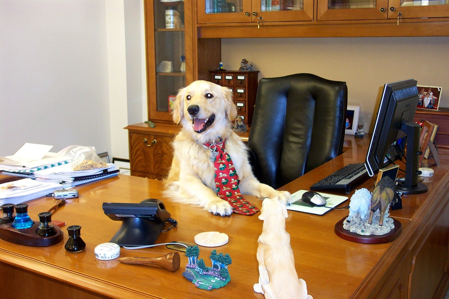 When Is National Take Your Dog To Work Day