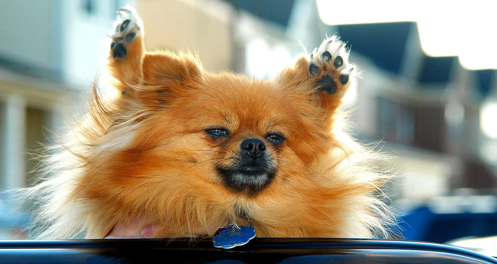 Woman Heroically Smashes the Window of a Mercedes With a Car Jack to Save a Roasting Dog