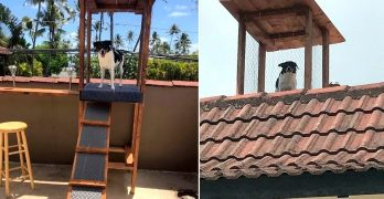 This Little Dog Loves to Keep Watch, So His Dad Built Him a Crow's Nest