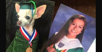 Daughter Swaps Out Family Photos for Ones of Their Dog and It Takes WEEKS for Her Mom to Notice