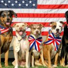 The Best Tips for Keeping Your Dogs and Cats Safe and Stress-Free This 4th of July