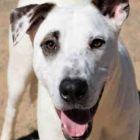 Palomo Is a Sweet, Shy Boy Who Needs a Kind and Loving Hand to Help Him Become the Best Dog Ever