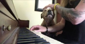 Pit Bull Drifts Off to His Happy Place When His Human Plays Piano or Guitar for Him
