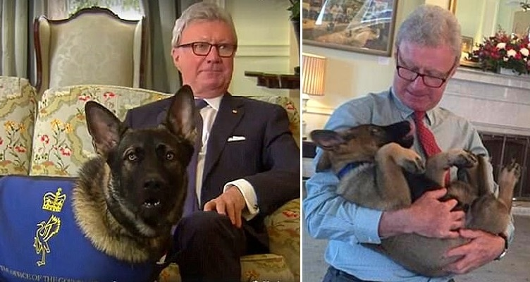 Puppy Who Flunked Out of Police Dog School for Being Too Friendly Now Has an Even Better Job