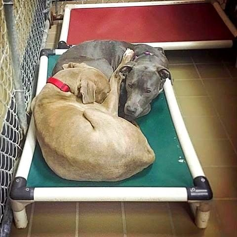 these shelter dogs refused to sleep on separate beds, and now they