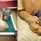 These Shelter Dogs Refused to Sleep on Separate Beds, and Now They'll Never Have to Be Apart Again