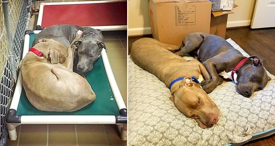 These Shelter Dogs Refused To Sleep On Separate Beds And