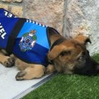 Police Dog Fired…For The Cutest Reason Ever!