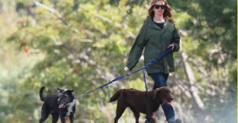 App Helps Julia Roberts Reunite With Her Lost Pooch