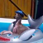 This Dog Has The Right Idea About Summer