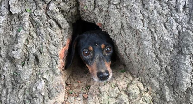 "All ""Bark!"" Off-Duty Troopers Rescue Pup Stuck in Tree Trunk"
