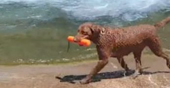 SOLO FETCH! Clever Texas Pup Devises A New Way To Play