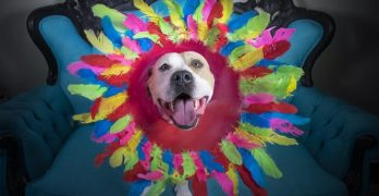 """""""Cones Of Fame!"""" Artist Helps Healing Dogs Find Homes!"""