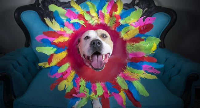 """Cones Of Fame!"" Artist Helps Healing Dogs Find Homes!"