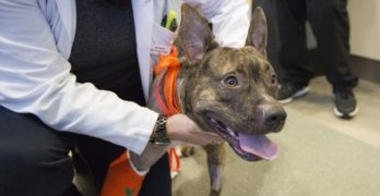 PUPDATE: Tigger The Dog's Journey To New Paws!