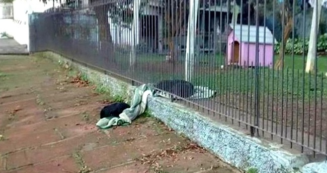 Awwww!  Compassionate Former Street Puppy Brings Her Blanket Outside to Share With a Homeless Dog
