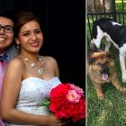 This Adorable Couple Adopts a Dog Every Year for Their Anniversary