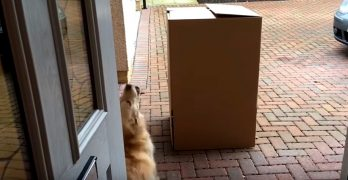 """What's in the Box??  WHAT'S IN THE BOX??!  Oh, It's My Human!"""