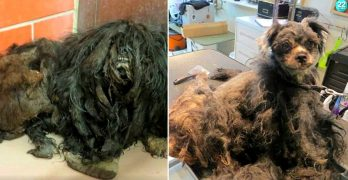 Dog Buried Under Pounds of Matted Fur Undergoes an INCREDIBLE Transformation