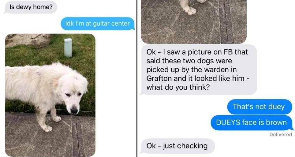 """Yesterday I Learned That My Mom Has No Idea What Our Dog Looks Like"""