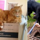 Hero Dog Finds Cat Missing for Weeks Without a Trace