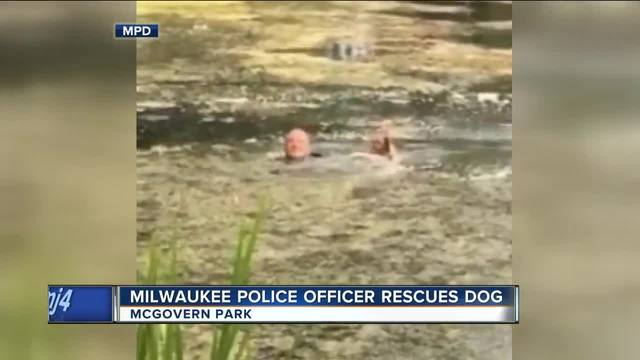 Police on Patrol Rescue Dog from a Lagoon not once, but TWICE in the Span of Just a Few Minutes