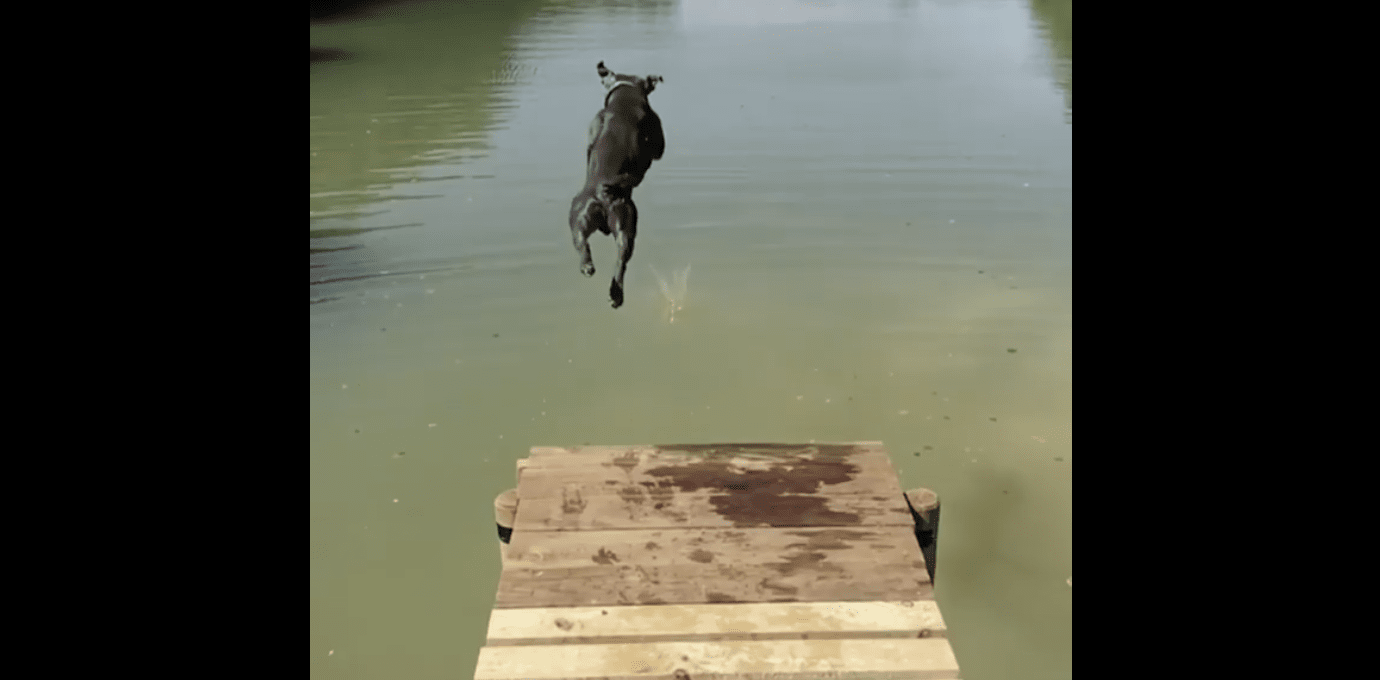 Dog Shows Us How to Dive into Life, Head-First!