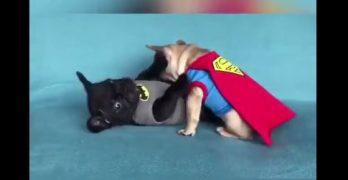 "Batman Vs. Superman 2: ""The Frenchening"""
