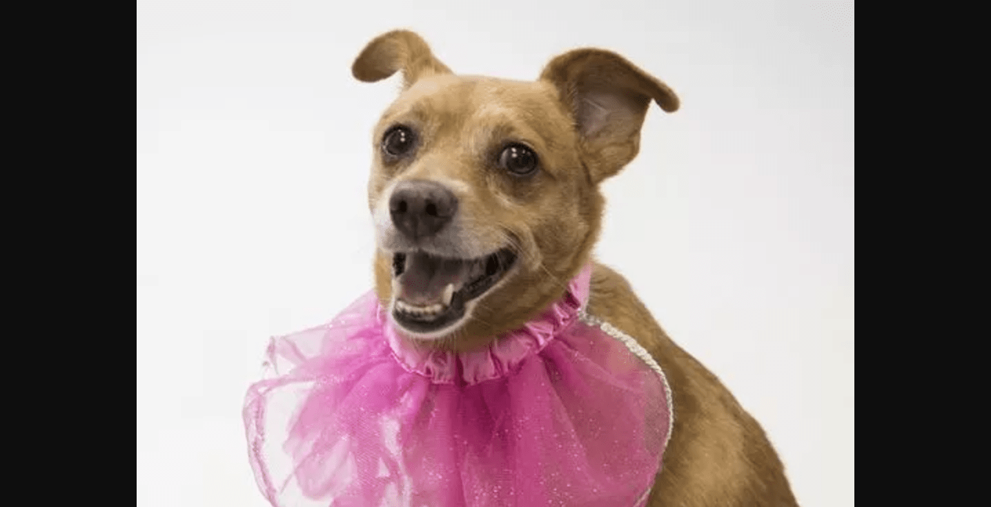 Shelter Is Hosting a Senior Dog Prom to Help Raise Awareness of Elderly Dogs Needing Forever Families