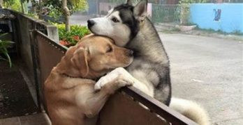Dogs Separated by Fences Formed the Sweetest Friendship