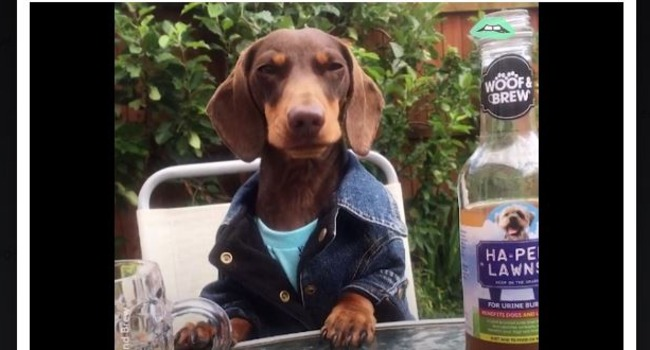 It's 5 O'Clock Somewhere … Time For A Dog Beer!