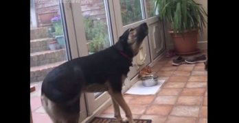 Check Out This Dog's Incredible Singing Voice!