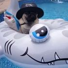 Shark Week, Life With Dogs-Style!