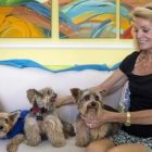 Stolen Yorkie Comes Home After 8 Years!
