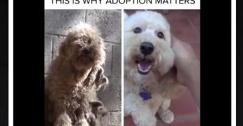 Need More Reasons To Adopt, Not Shop? Check Out This Video!