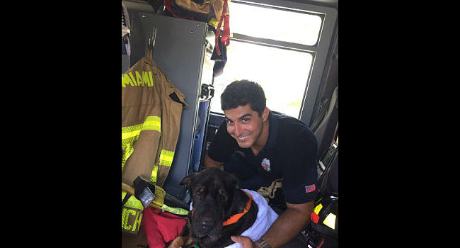 Amazing Rescue: Watch Miami Firefighter Save Drowning Dog