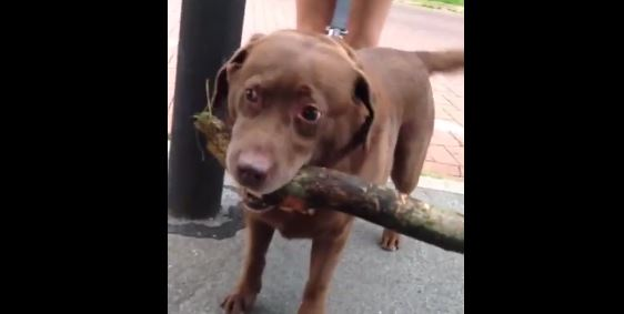 """""""I Fetched A Tree!"""""""