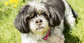 LWD Adoptable Dog of the Day: Sweet Senior Gypsy Rose