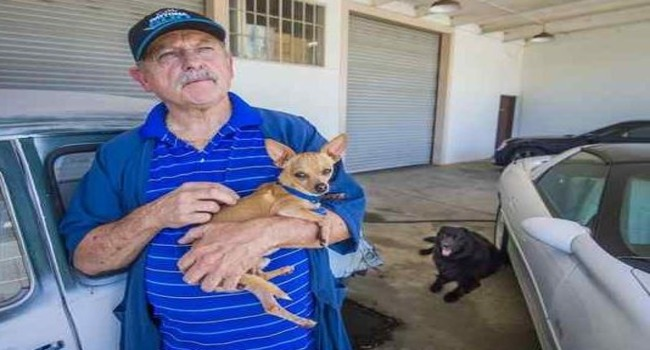 SURVIVOR: Chachi the Chihuahua Survives Two Weeks in the Wilderness…!