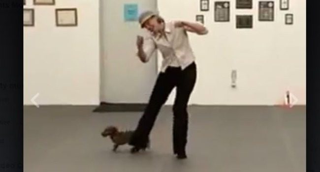 Dancing Dachshund Will Make Your Day