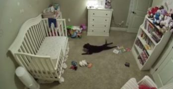 Dog Not Allowed In Baby's Room Gives Zero You-Know-Whats…!
