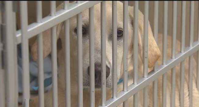 Safe in the States: 200+ Doomed Dogs Saved From Euthanization in Puerto Rico