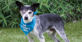 Super-Senior Snoopy Is A One-Eyed Wonder Who Loves To Give Kisses…!