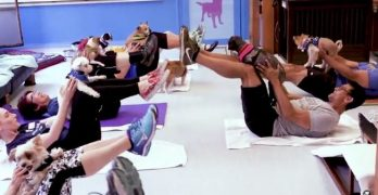 "Could ""Muttsercise"" Be The Next Hot Trend In Fitness…?"