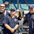 Rocket To The Rescue! Border Collie Mix Among The Heroes of Hurricane Harvey