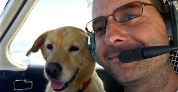 High-Flying Rescue: Veteran Buys Plane To Transport Shelter Dogs To New Homes