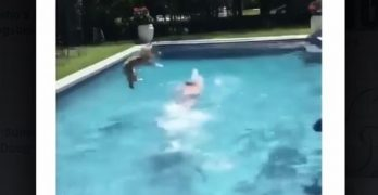 CANINE-BALL! Excited Dog NEEDS To Swim With His Person