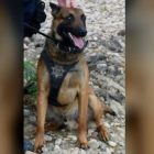 Colorado K-9 Opens Gate With Paw To Rescue His Human Partner